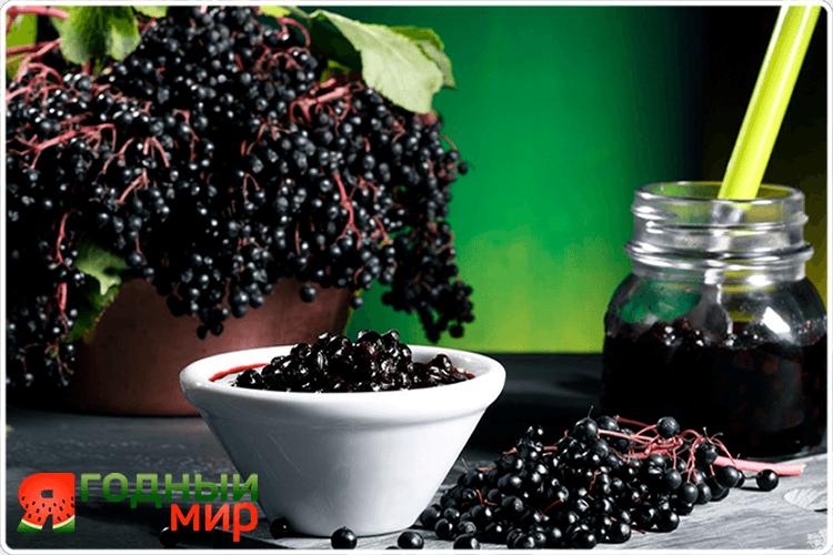 чёрные ягоды бузины