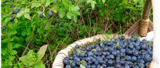 ягодный урожай